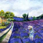 Where Lavender Grows