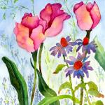 Tulips and Coneflowers