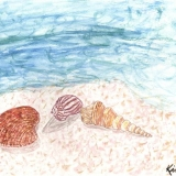 Simply Seashells