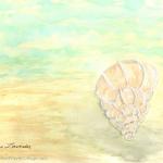 Pastel Shell