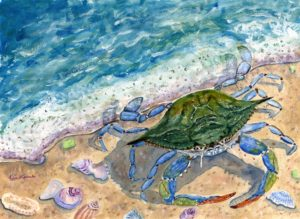 Female-Blue-Crab-color-corrected-web
